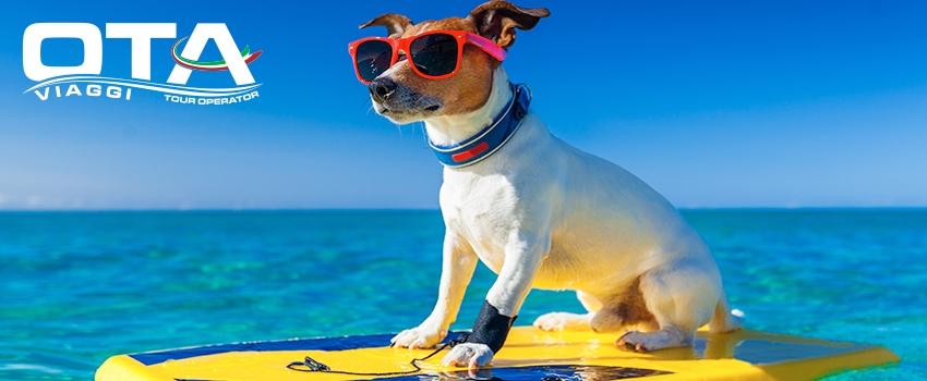 In viaggio con il pet: come portarli in vacanza con noi